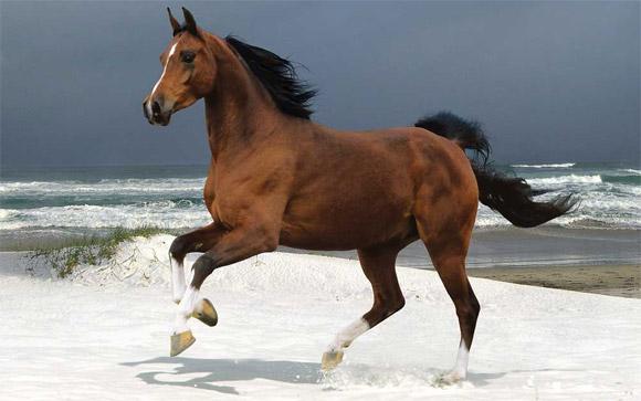 Gajas em Bikini e Cavalos de Alta escola